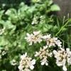 あっ!花が咲いてる (^。^)