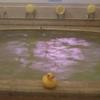 温泉アヒルサミット2010in別府、開催☆