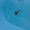 金魚のベランダ生活 軌道にのる