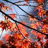 河口湖へ秋を探しに