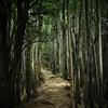 WILD LIFE #6 和久羅山登山