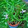 青色系植物2021