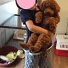 5kgの犬と小学生のサイズ感