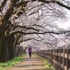 護国神社と磯辺堤の桜道