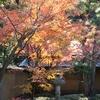 【紅葉を訪ねて】 鎌倉 「一条恵観山荘」 ~朝廷文化の雅な空間
