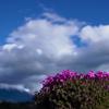 【52万株の芝桜に圧巻!】河口湖の富士芝桜まつりに行ってきました。