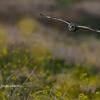 2020年1月25-26日の鳥撮り-栃木県