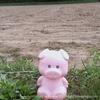 祝!ピグユキくん誕生日!!未公開写真とピグユキくんなう