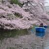 【行列必至】花見シーズンの千鳥ヶ淵ボート乗り場