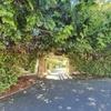 【タスマニア】【ローンセストン】日本猿に会える!広くて自然いっぱいなシティパークで気分転換。喧嘩した後のひとり散歩。