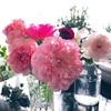 9月下旬のベランダのバラ達