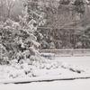 関東も大雪です。