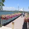 ソウル 서래섬(ソレソム)の菜の花畑がとてもフォトジェニック