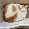 まんまる猫背に優しい爪とぎカリカリーナ