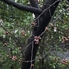 桜の開花とコロナの沈下を祈ります。