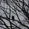 早朝探鳥・石神井公園の野鳥/2019-2-2、善福寺公園の野鳥/2019-2-4
