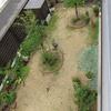 2017年6月の庭