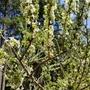 果樹の開花具合