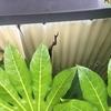 長岡市水通町で雨漏り補修!タキロンの割れとコーキング
