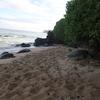 マウイ島のビーチにウミガメがたくさん寝てた♡
