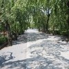 【旅行記】2020夏 三島日帰り旅② 三島の地名の由来でもある三嶋大社を観光する