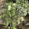 爽やかで涼し気な印象を与えてくれる真っ白な花♡