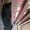 甲斐犬サンとネェネ、商談に挑む❗️の巻〜熱クナッチャ負ケナノネン(炎ロ炎)~~~