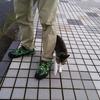 土曜日はmatsuさんと淡路島へメッキ釣り