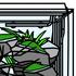 水草水槽の一般的な立ち上げ方法を紹介します