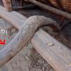 昔は曲がった松の木の形を使って柱にしていました。適材適所とはこれだ!