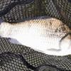 8カ月ぶりの釣り、お魚に竿ごともってかれた