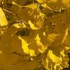 芸術の秋と運動の秋。