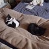 猫の門脈シャントの検査と去勢手術を農工大で受けた