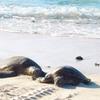 5月23日は「世界亀の日(World Turtle Day)」~ウミガメさ~いらっしゃ~い(*´▽`*)~