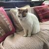 画家:呑山政子さんを訪ねて、行動美術展へ ~猫のいるアトリエ:インタビュー(前編)~