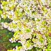 春光うららかな季節