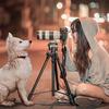 オオカミの習性から犬を知る
