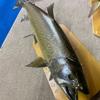 岩魚58cm!