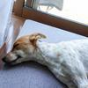 黒柳徹子さん朗読の「窓ぎわのトットちゃん」