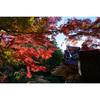 福島市・文知摺観音普門院で紅葉を撮ってきた!【福島の紅葉スポット】