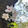気づけば桜も散り始め⭐︎でもそれがまた風情がありますね♪
