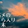 0826【ツバメの塒入りは8月末でも見られる?】昭和記念公園で野鳥さがしたら鳥の耳の穴を見た【今日撮り野鳥動画まとめ】身近な生き物語