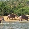 ウガンダ観光:クィーン・エリザベス国立公園