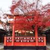 車折神社の紅葉、見頃や現在の状況。