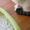 ネコのトイレの回数