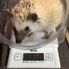 体重測定☆