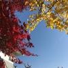 <27>紅葉の園部、キノコの丹波。日帰り一人旅 / 南丹・篠山 (グルメ・紅葉) [2030文字]