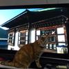 11月後半の #ねこ #cat #猫 どらやきちゃんA