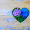 京都・長岡京 - 楊谷寺の新緑と紫陽花