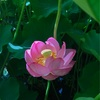 瞑想から教えられるプロセス